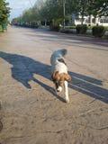 собака сиротливая стоковое изображение rf