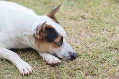 собака сиротливая Стоковые Изображения RF