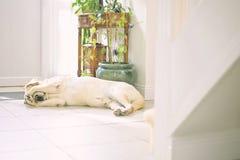 собака сиротливая Стоковые Фото