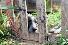 собака сиротливая Стоковое Изображение
