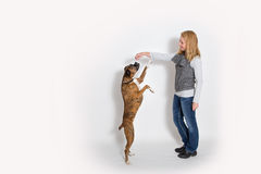 Собака сидит вверх для обслуживания стоковая фотография rf
