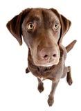 Собака сидя и смотря вверх стоковое изображение