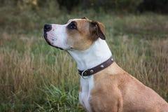 Собака сидя и смотря вверх Стоковые Фото