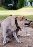 Собака сидя морем Стоковые Фото