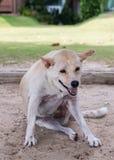 Собака сидя морем Стоковое Изображение RF