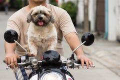 Собака сидя на велосипеде Стоковое Фото