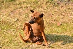 Собака сидя на земле на утре стоковая фотография