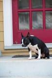 Собака сидя на парадном крыльце стоковое фото rf