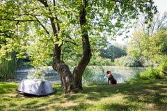 Собака сидя на пруде Стоковые Изображения