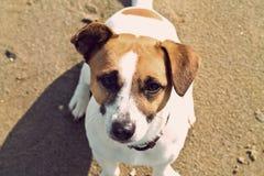 Собака сидя на пляже Винтажное влияние Стоковые Фото