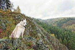 Собака сидя на скале Стоковые Фото