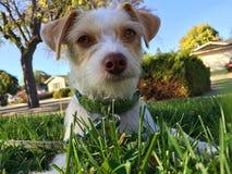 Собака сидя на траве Стоковое Изображение