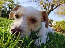 Собака сидя на траве Стоковые Изображения