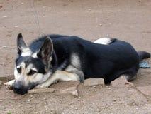 Собака скучает по предпринимателю стоковая фотография