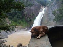 собака славная Стоковая Фотография RF