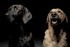 Собака смешанной породы коричневая и черная с портретом волшебных глаз в blac Стоковое Фото