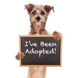 Собака смешивания терьера держа знак Adoped стоковая фотография rf