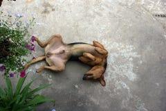 собака смешная стоковые фотографии rf