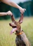 собака смешная Стоковая Фотография