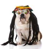собака смешная Стоковые Изображения