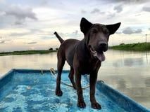 собака смешная стоковое фото
