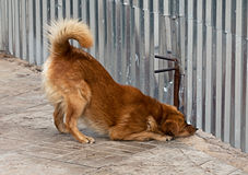 Собака смотрит вверх под загородкой Стоковое Фото