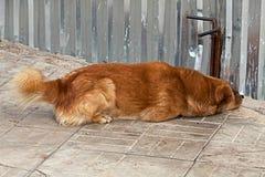 Собака смотрит вверх под загородкой Стоковые Изображения