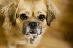 Собака смотря вверх Стоковые Фотографии RF