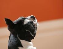 Собака смотря вверх стоковое фото rf