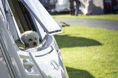 Собака смотря вне окно каравана Стоковая Фотография RF