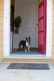 Собака смотря вне парадный вход стоковая фотография rf