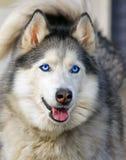 Собака смотря вперед стоковая фотография rf