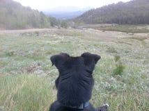 Собака смотря горы Стоковое Изображение