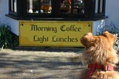 Собака смотря знак обеда Стоковое Фото