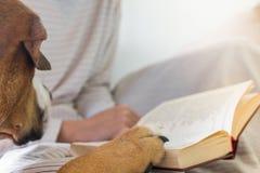 Собака смотря книгу стоковая фотография