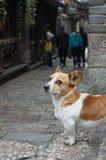 собака смотря туристов Стоковая Фотография