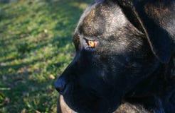 собака смотря уныл Стоковая Фотография