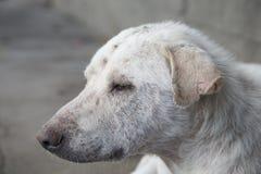 Собака сна стоковые изображения