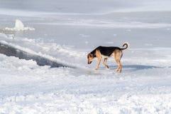 Собака, снег, река Стоковые Фото
