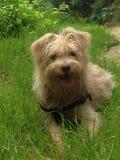 Собака Солнця стоковые изображения