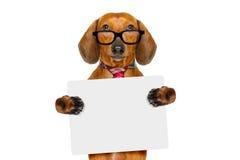 Собака сосиски таксы на командировке Стоковые Фото