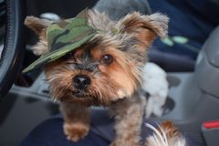 Собака солдата стоковые фотографии rf