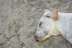 Собака спать бродячая стоковая фотография rf