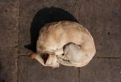 Собака спать в квадрате Durbar, Катманду Стоковое фото RF