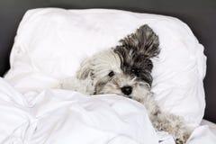 Собака спать в кровати стоковое изображение