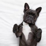 Собака спать в кровати стоковое фото rf