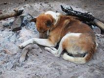 Собака спать на золе Стоковое Изображение