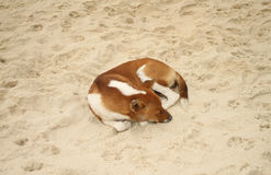 Собака спать на песке Стоковое фото RF