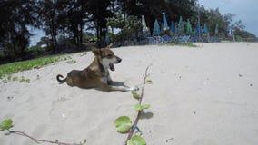 Собака спать на пляже сток-видео