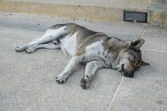 Собака спать на поле цемента Стоковое Изображение